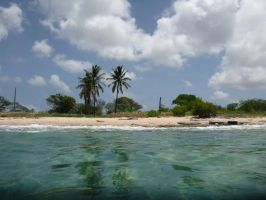 Bonaire-shore-diving-site