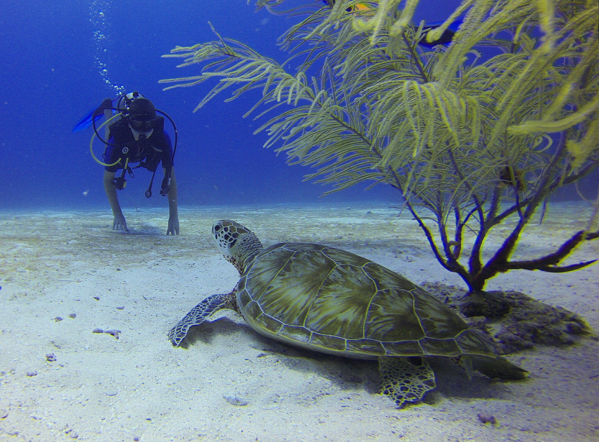 Diver and Turtle in Mexico