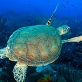 Eco Dive Barbados