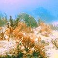 Xtreme Marine Scuba Falmouth Antigua