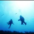 Dive Xplor Riviera Maya