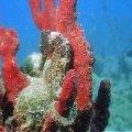 Aquanauts Grenada