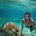 Turtle and Snorkler