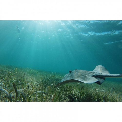shark-ray-alley-belize.jpg