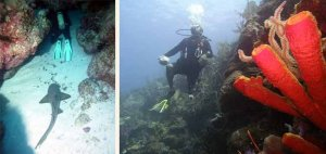 CYPRUS GARDENS South Ambergris Caye