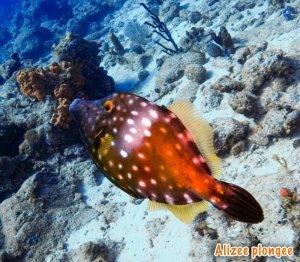 alizee plongee