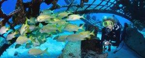 Provo Wreck Dive