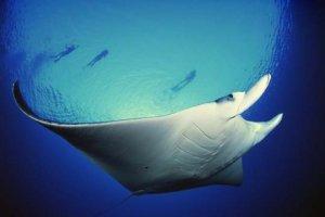 Manta Lodge and Tobago Dive Experience