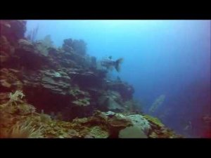 Diving The Belize Barrier Reef, Eagle Ray Canyon