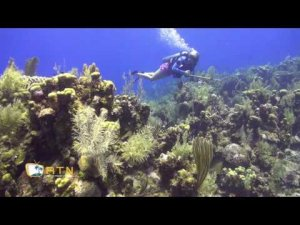 Roatan Diving - West End Wall