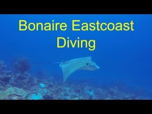Bonaire Eastcoast Diving - GoPro